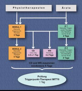 Graphik Triggerpunkt-Therapeut IMTT